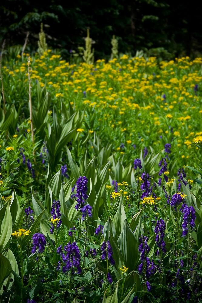 Wild Flowers by jstew