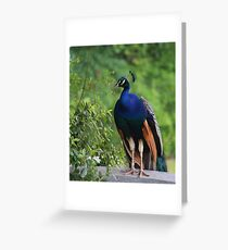 In Deep Thought Greeting Card