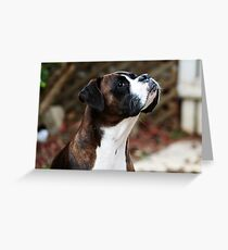Something In the Air -Boxer Dogs Series- Greeting Card