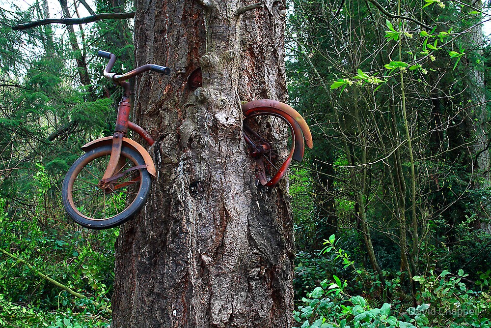 The Bike-Eating Tree by David Chappell