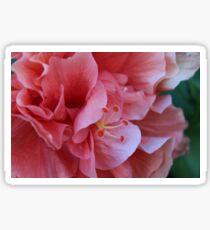 Very close up pink flower Sticker