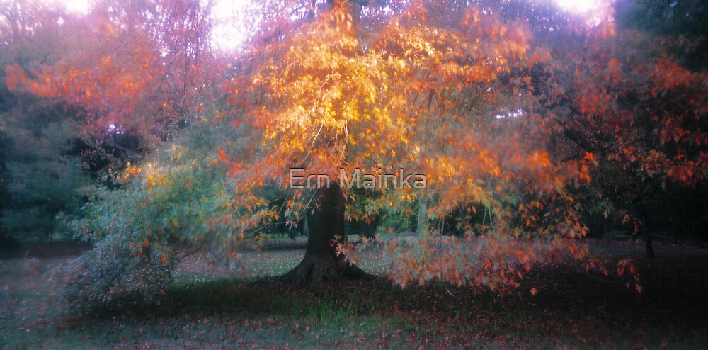 Autumn Oak by Ern Mainka