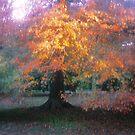 Autumn Oak by Ern Mainka