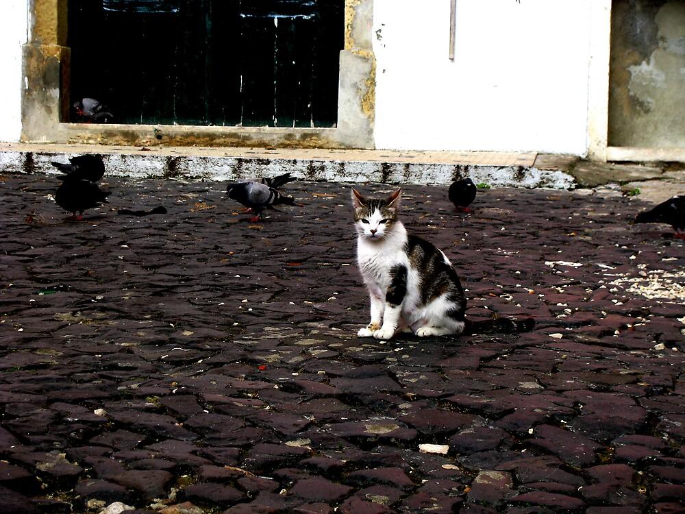 Cat Amongst the Pigeons by Glenn Browning