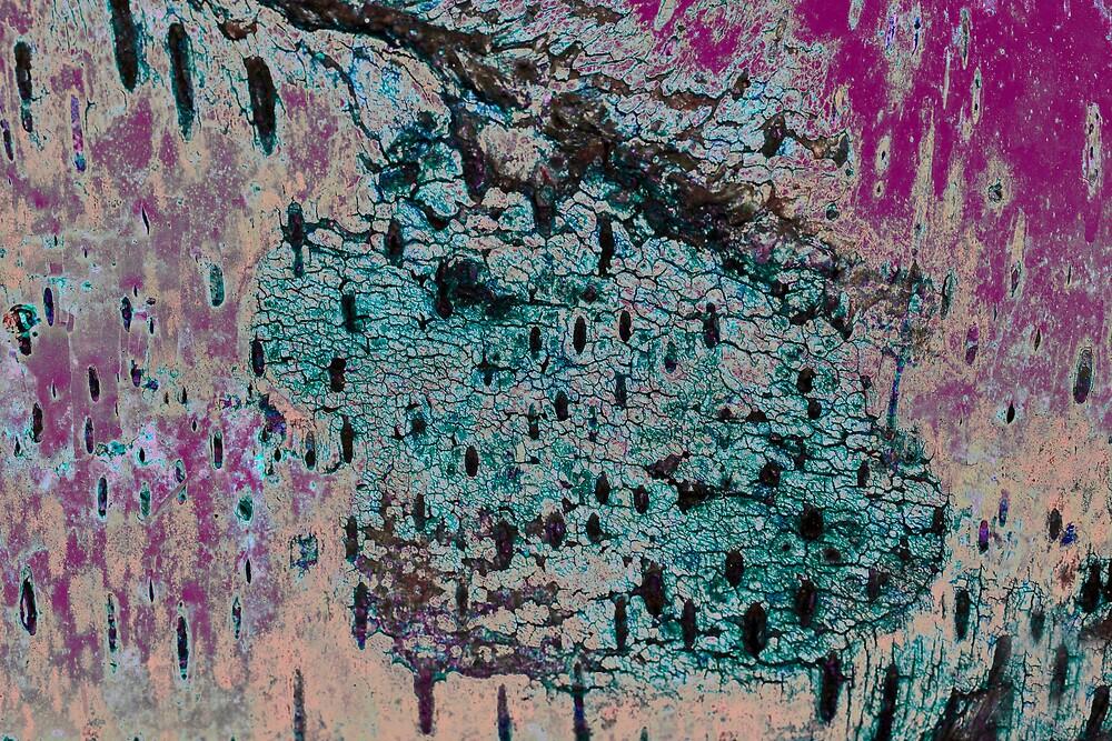 birch by jlbohin