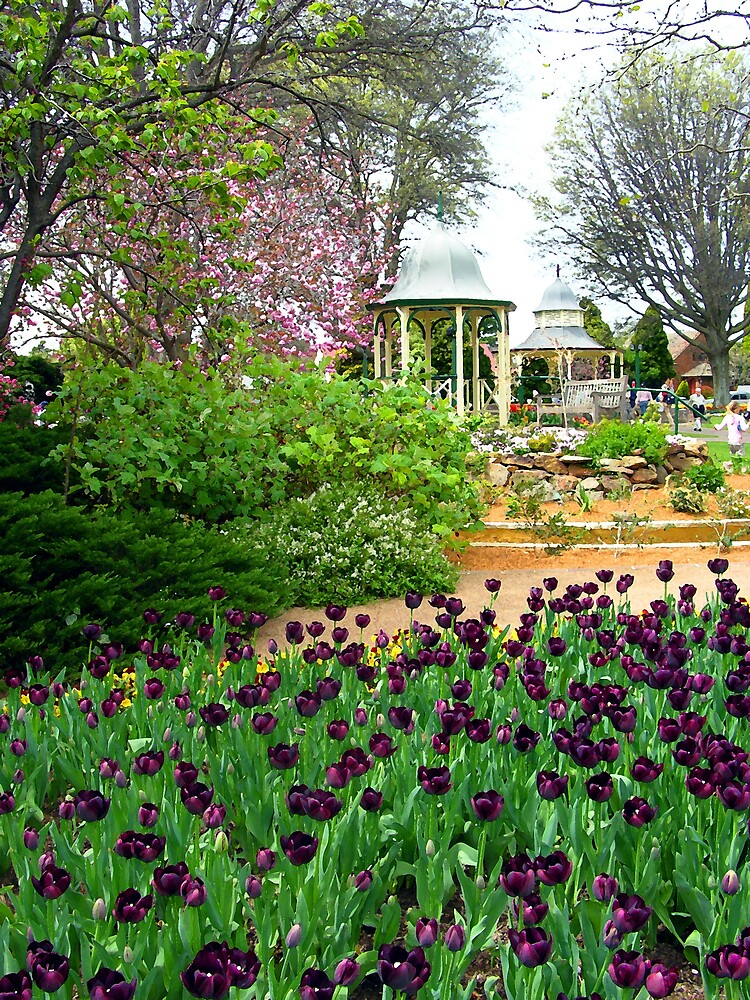 Floral Display with Rotunda, Bowral, NSW, Australia by Peter Clements