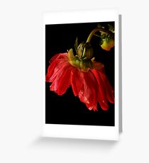 Dahlia ballerina Greeting Card