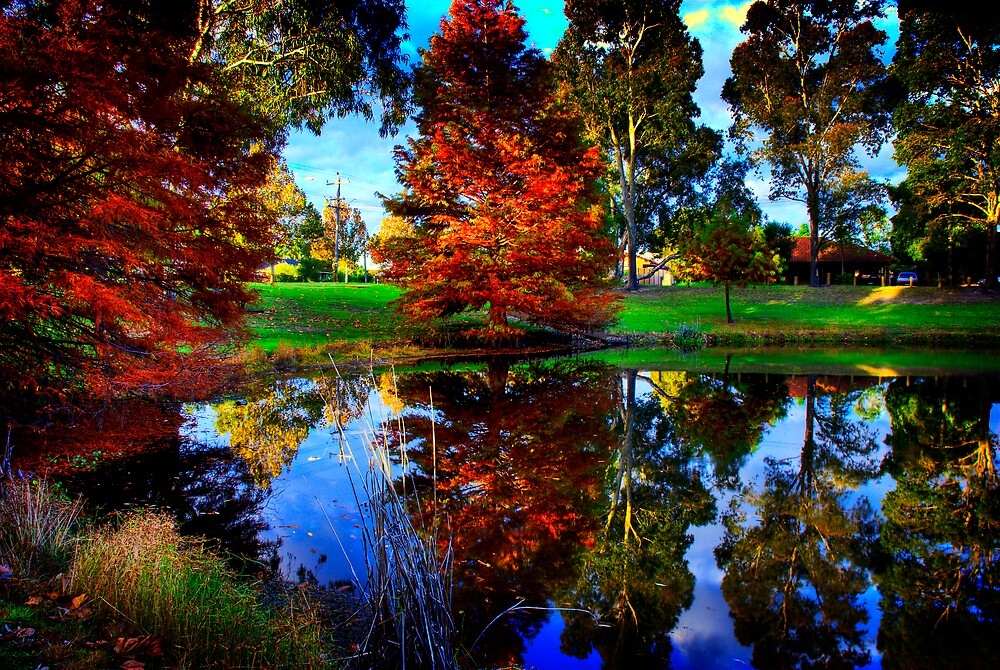 Autumn Tones by Damiend