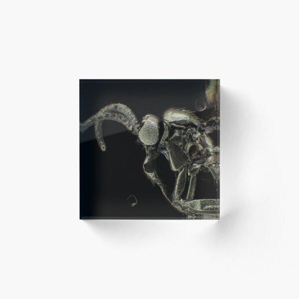 Gold-coated fungus gnat under light microscope Acrylic Block