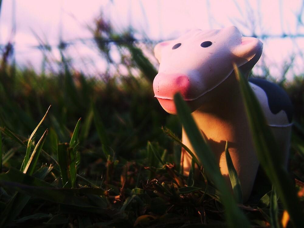 Pocket Cow at Dusk by Diana Forgione
