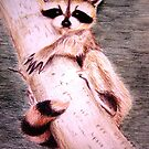 Raccoon by Sumaridel
