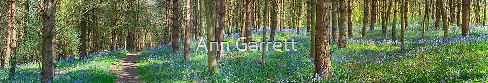 Bluebell Path by Ann Garrett