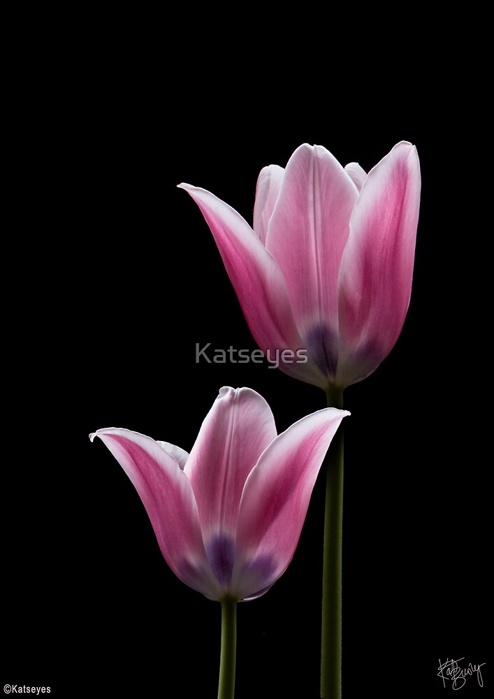PINK TULIPS 3 by Katseyes