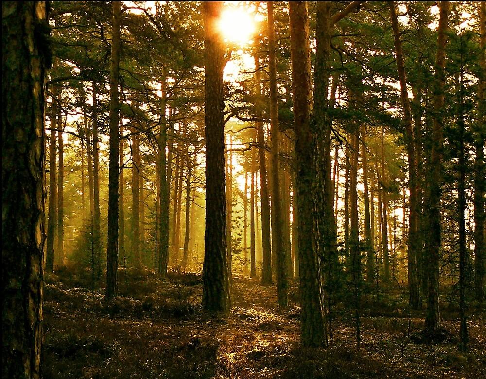 forest sunbeams by iravande
