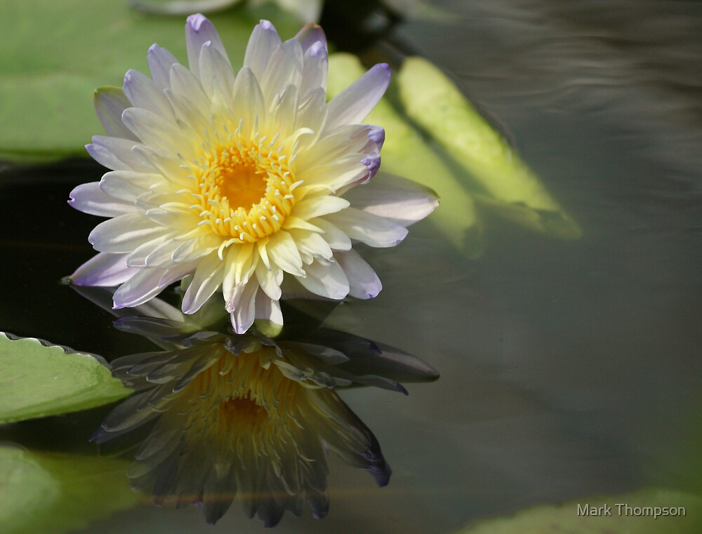 Waterlily Reflection by Mark Thompson