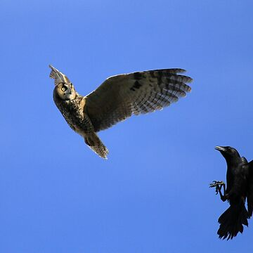 Owl Chased by Crows by DARRINSWORK