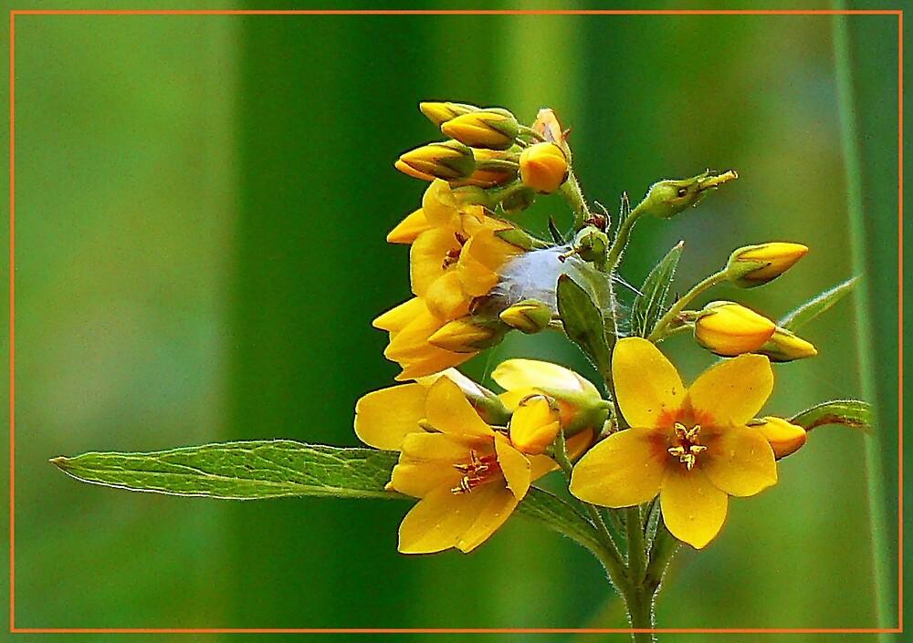 wild flowers by iravande
