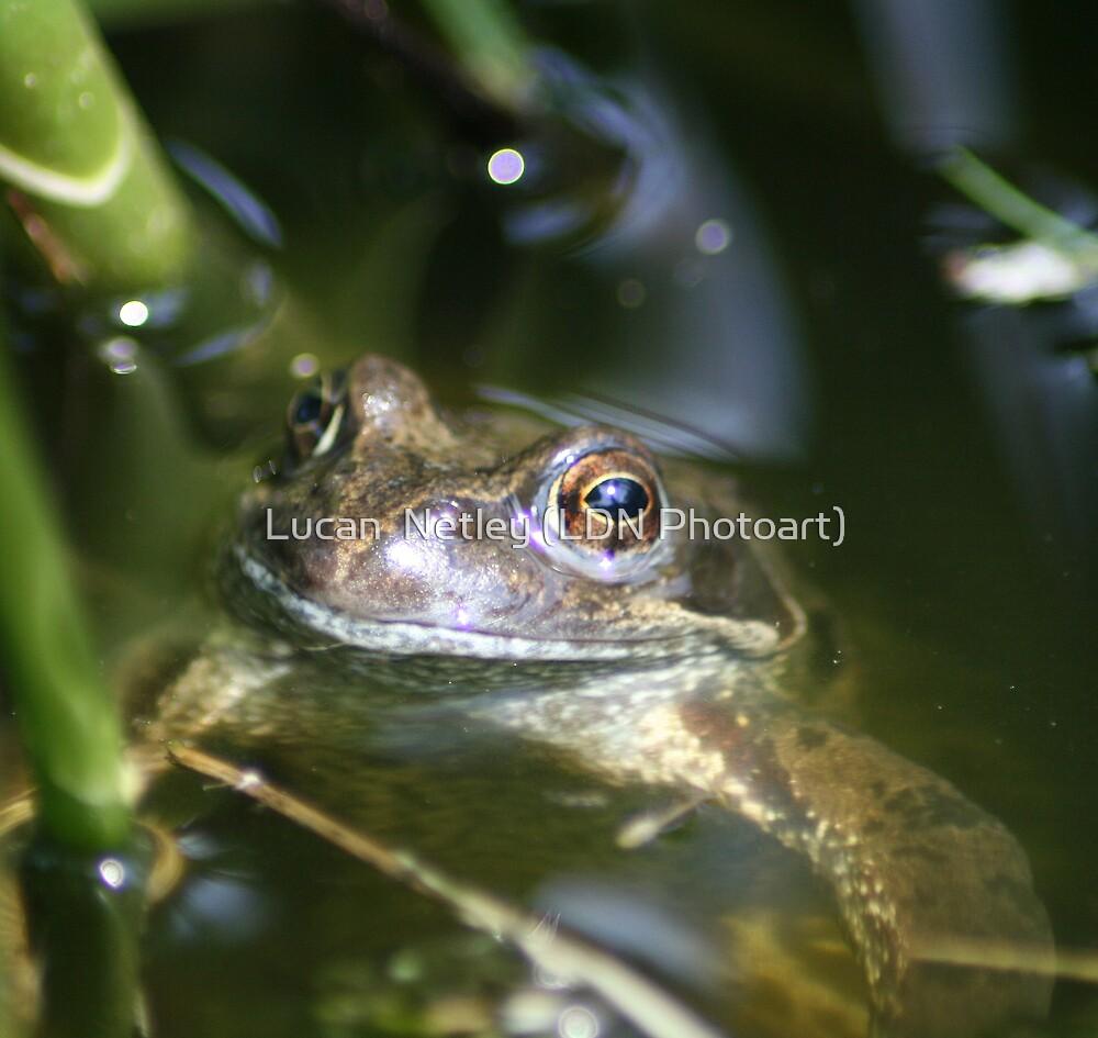 keeping his head above water....... by Lucan  Netley (LDN Photoart)
