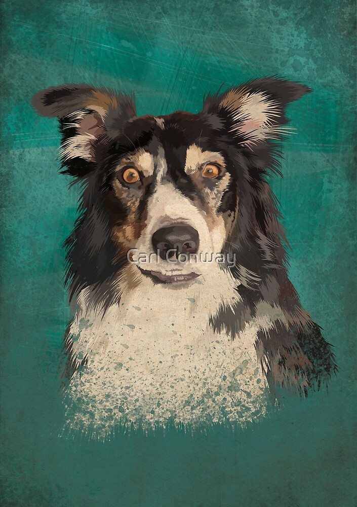 Quinn - border collie by Carl Conway
