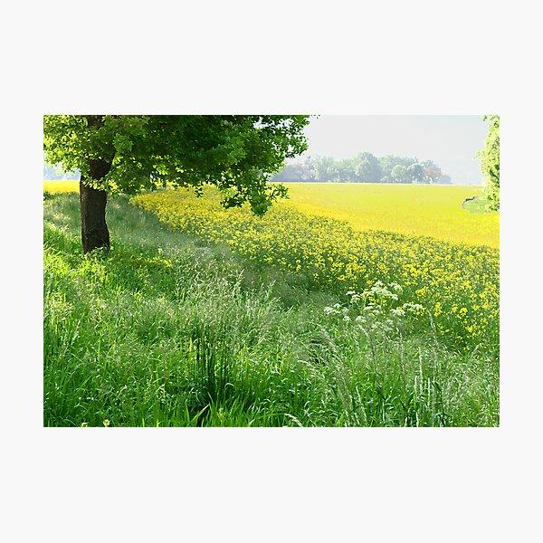 vibrant, happy meadow Photographic Print