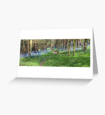 Bluebell Path 2 Greeting Card