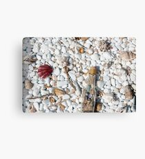 Texture covered with colorful seashells and starfishes Canvas Print