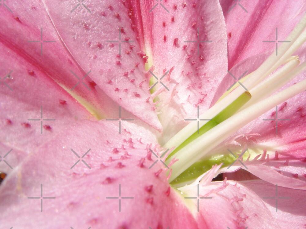 Pink Lily by ScarlettRose