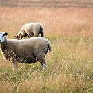 Grass cutters by JEZ22