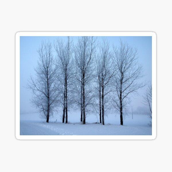 Winter Trees II Sticker