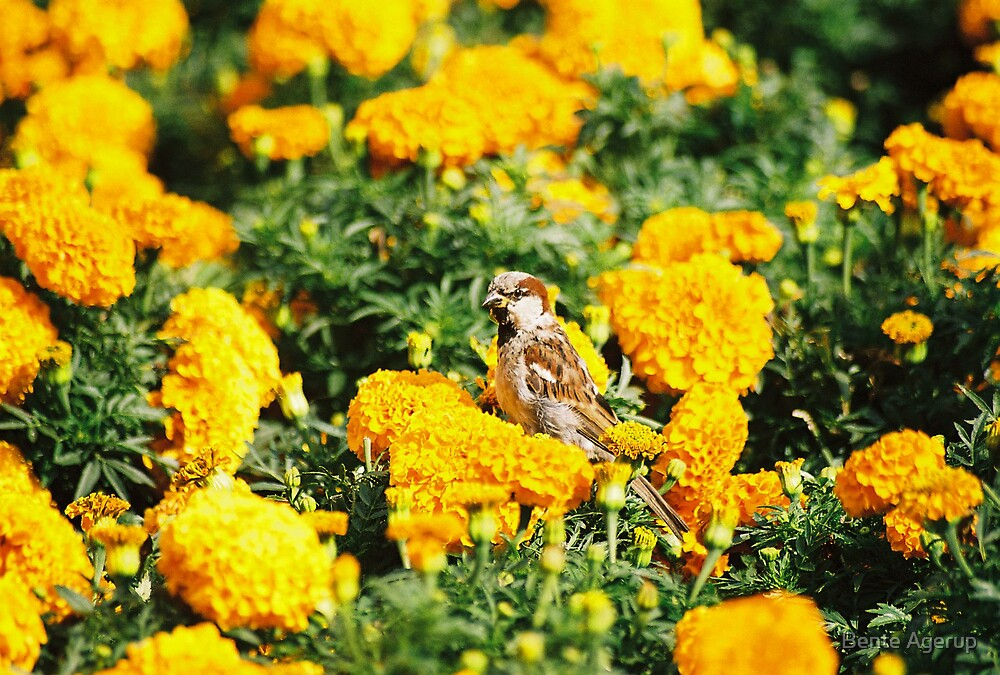 Bird in yellow by Bente Agerup