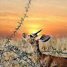 Sunset in Namebia - Wildlife by Gilberte