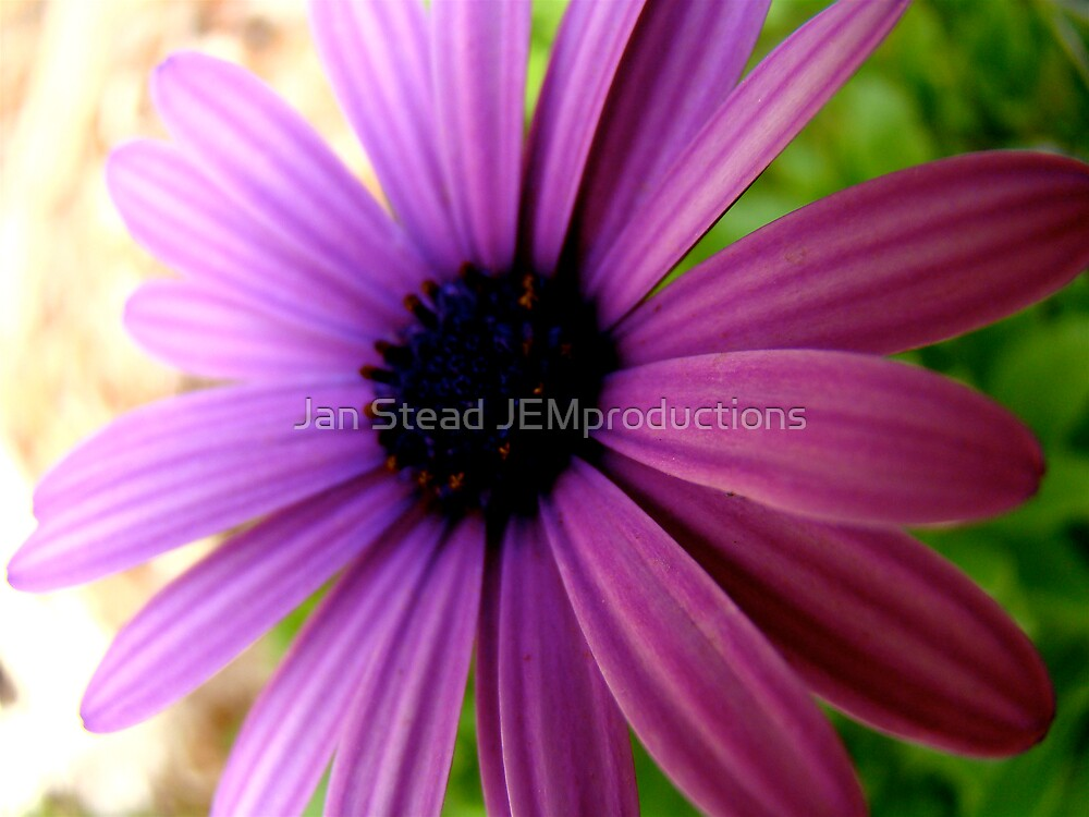 fading by Jan Stead JEMproductions
