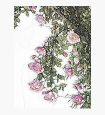 Arty Hanging Roses Photographic Print