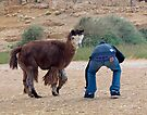 You want me to ride on his back? by Eyal Nahmias