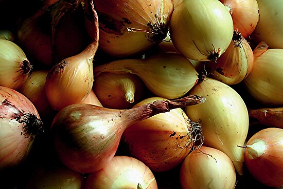 Onions  by Stephen Thomas