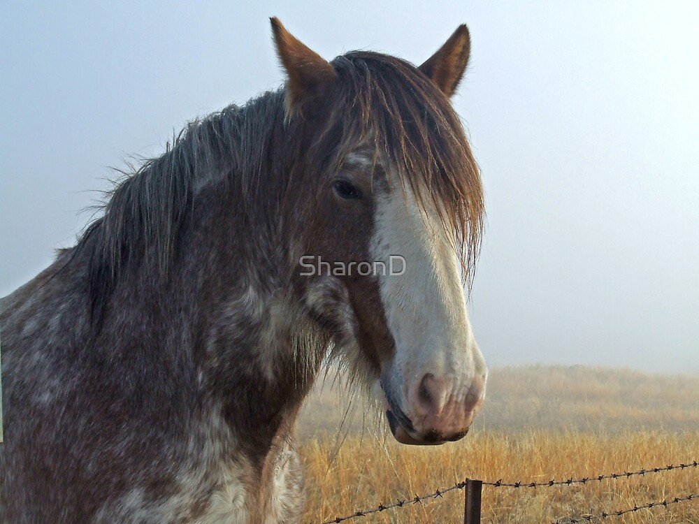 Horse in the Fog by SharonD