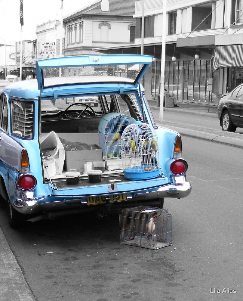 The Bird Shop -Marrickville by Lila Alias