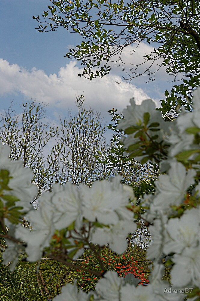 Spring Sky 2 by Adrena87
