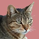 Stunning Tabby Cat Close Up Portrait Vector  by taiche