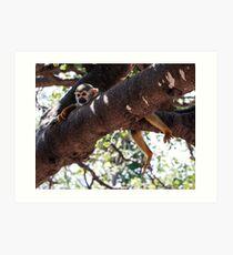 Green monkey lies on a tree branch Art Print
