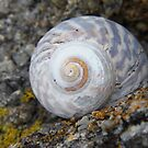 Little Shell by sarah ward
