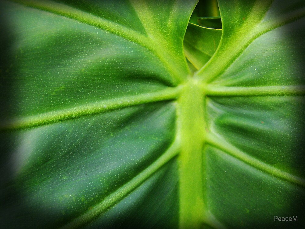 green detail by PeaceM