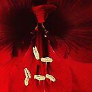 Hibiscus  by iamelmana