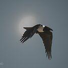 The Crow  (Corvus albus) by Deborah V Townsend