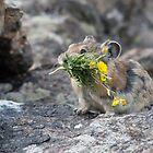 Bringing flowers by Eivor Kuchta