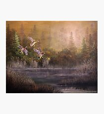Wood Duck Hideaway Photographic Print
