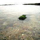 sea by imogen