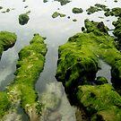 green sea by imogen