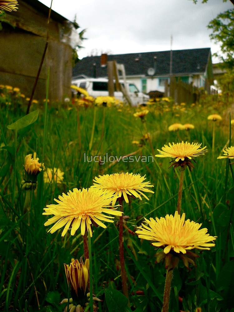Spring by lucylovesvan