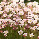 bright flowers flowering moss  by mrivserg